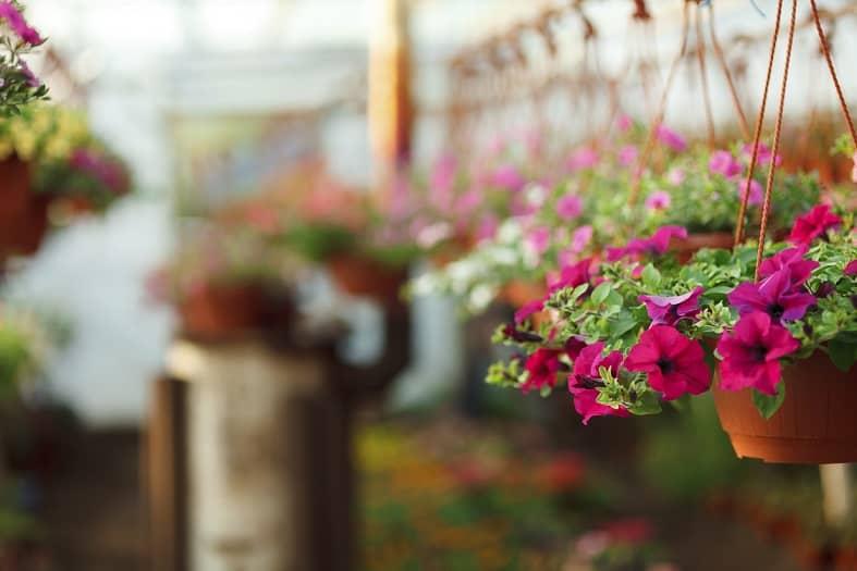 small garden bright flowers