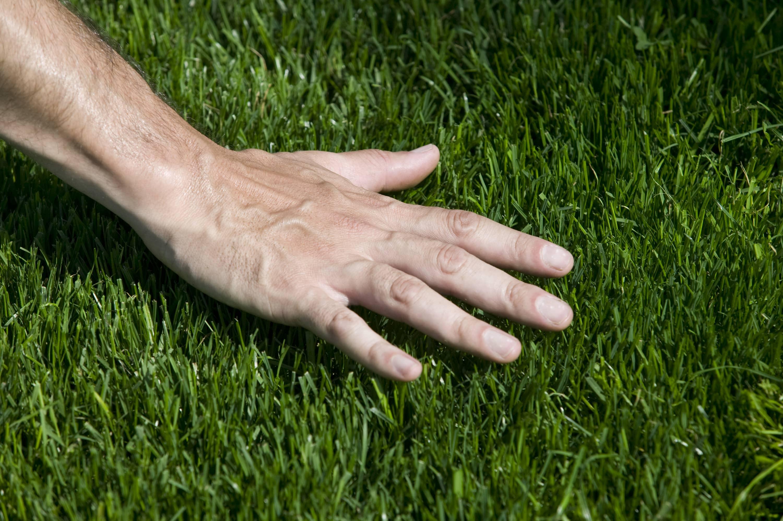 hard-wearing lawn