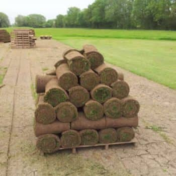 freshly grown turf